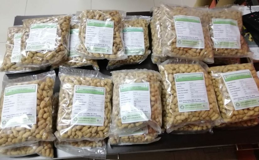 SIFI LIVELIHOOD GROUPS VENTURE INTO BUSINESS:PEANUT FARMING